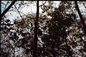 27 - Séminaire de 1985 - La Hutte de Sudation - Labaroche - France